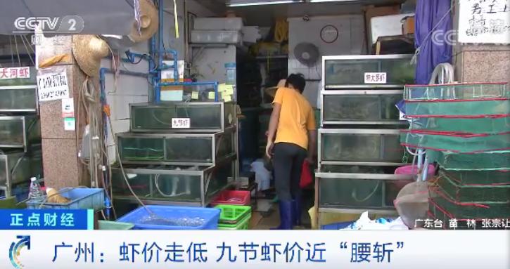 """腾达娱乐登录:国产虾""""对半砍"""":广东虾价创五年来新低,这是为虾米呢?"""