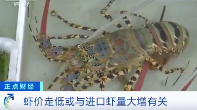 """國產蝦""""對半砍"""":廣東蝦價創五年來新低,這是為蝦米呢?"""