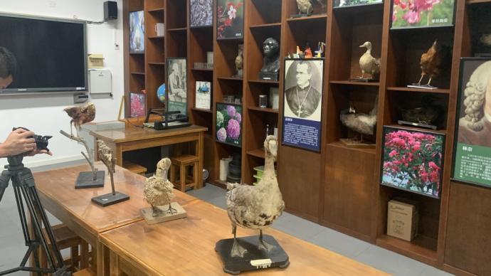 百岁老人从教时制作的标本60岁了,受梅雨威胁送博物馆修复
