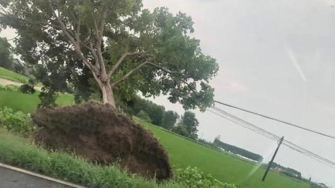 江苏海安南莫镇遭受大风强降雨袭击,约168处房屋受损
