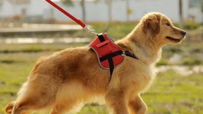 动物防疫法修订草案:拟完善饲养犬、猫管理,强化风险雷竞技官网app