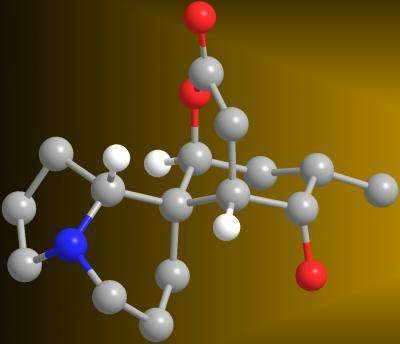 分子生物模型
