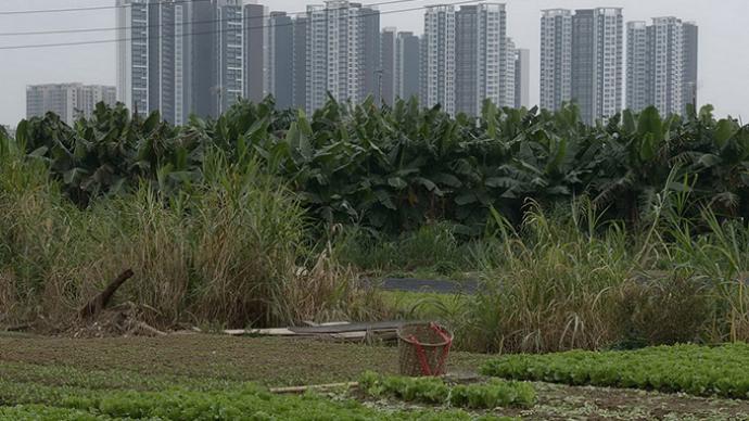 如何解决大城市用地指标困境?深圳探索创新耕地占补平衡制度