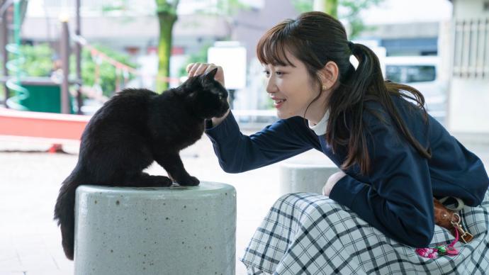 """一只黑貓當""""飯托"""",串起銀座巷子深處的故事"""