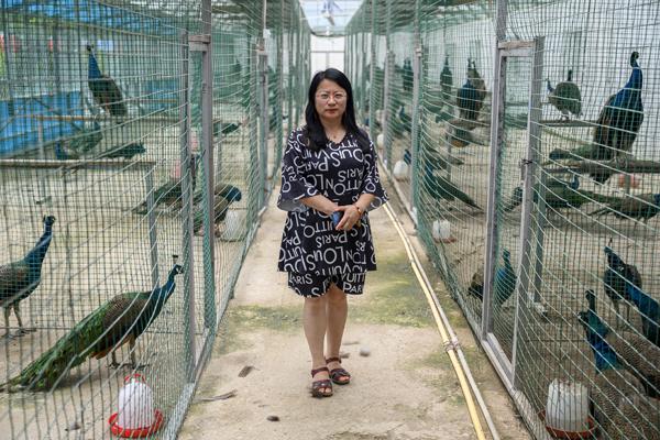 2020年8月,内蒙古兴安盟义勒力特嘎查,义勒力特孔雀园负责人周海燕。