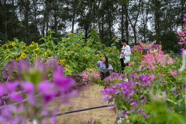 2020年8月,内蒙古兴安盟义勒力特嘎查,在开心果园内游玩的游客。