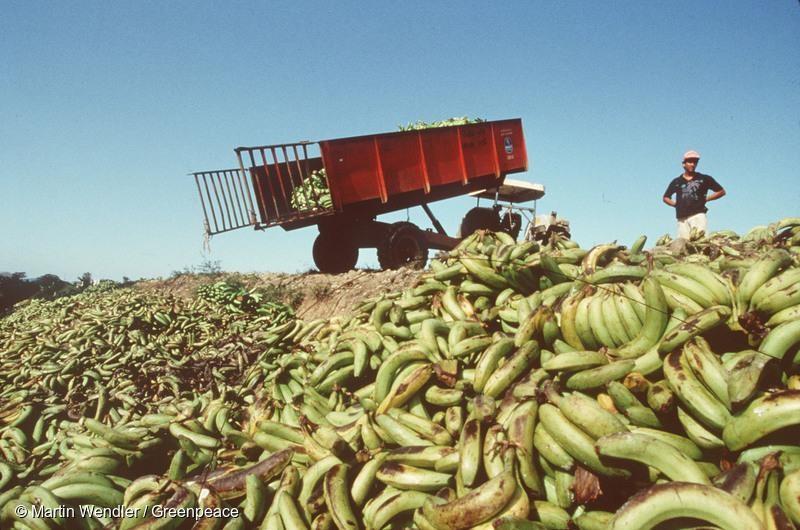 香蕉被抛弃在垃圾场。 ©Greenpeace