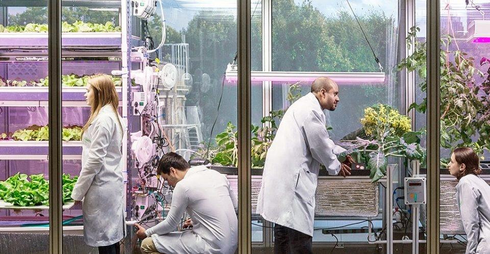 MIT Media Lab、Target、IDEO联合成立未来食物实验室,研究课题包括城市空间室内垂直种植。