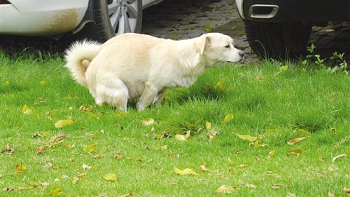 揚州整治不文明養犬:未系繩視為流浪犬收容,繩長超兩米罰款