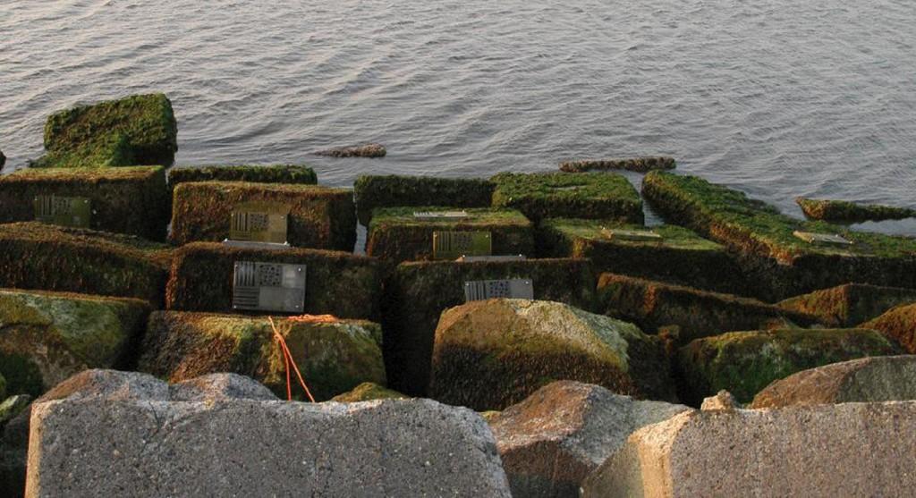 生态混凝土-艾默伊登堤防。图片来源:http://dutchdikes.net/