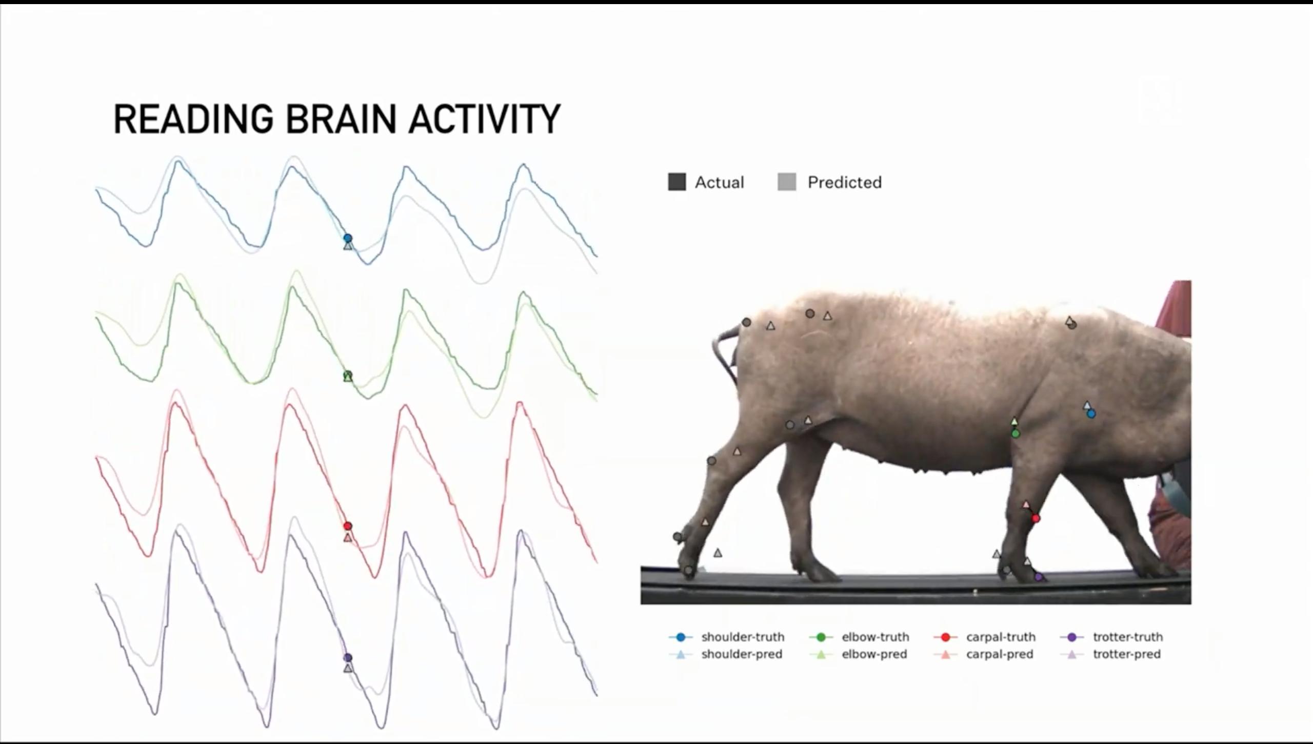 读取大脑活动