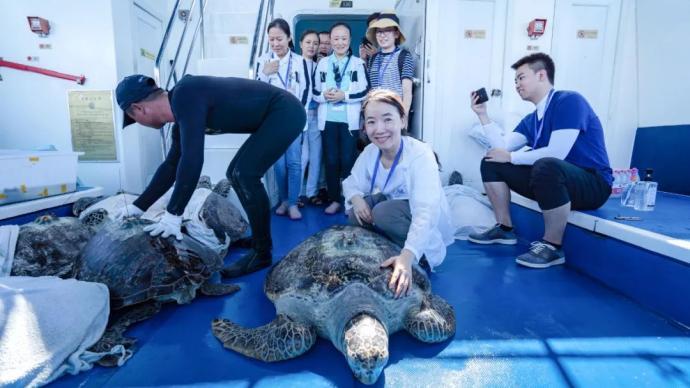 放歸大海的海龜發回衛星信號,為保護種群提供洄游路徑數據