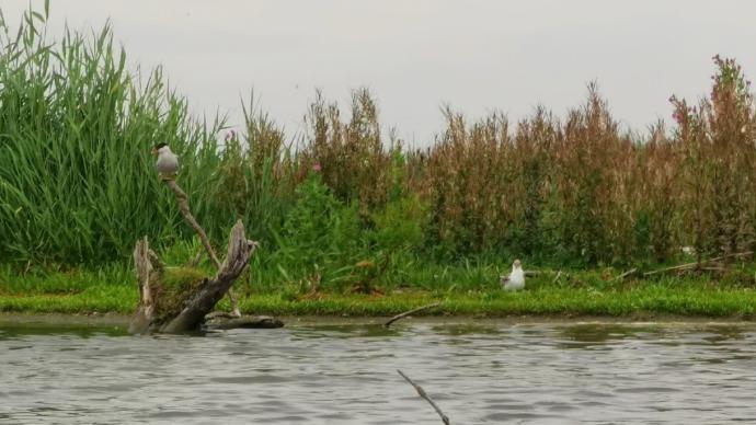與洪共存|新自然:荷蘭為何花巨資為鳥兒建島