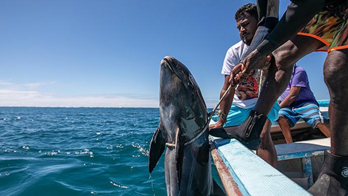 早安·世界|毛里求斯海豚死亡數量升至38只