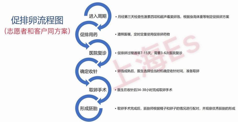 上海一家代孕公司提供的卖卵女孩促排卵流程图。