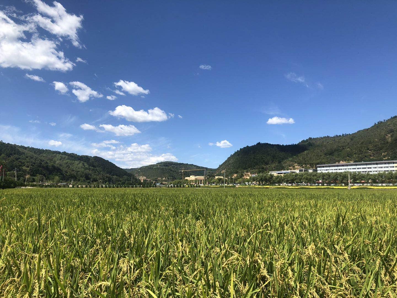 南泥湾大生产运动中开垦的稻田被沿用至今。