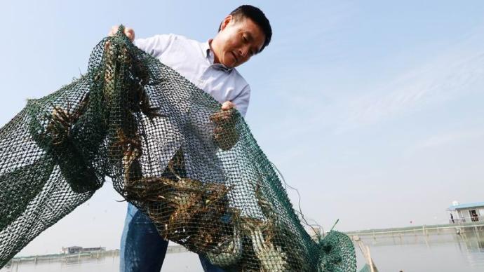 陽澄湖吃蟹之旅提上日程