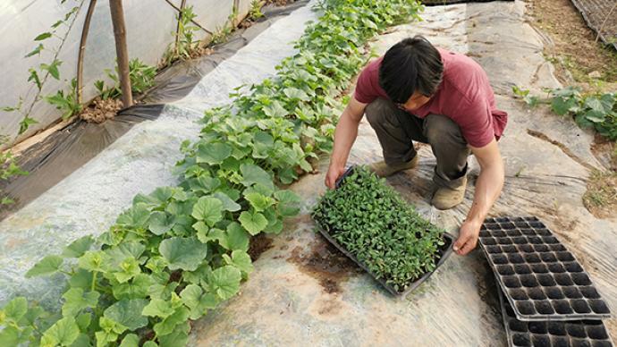 武汉大学|调研回访武汉郊区因疫情受损的种养殖户