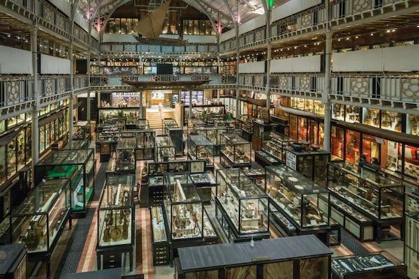 牛津大学皮特里弗斯博物馆以收藏稀奇古怪的珍品而闻名。