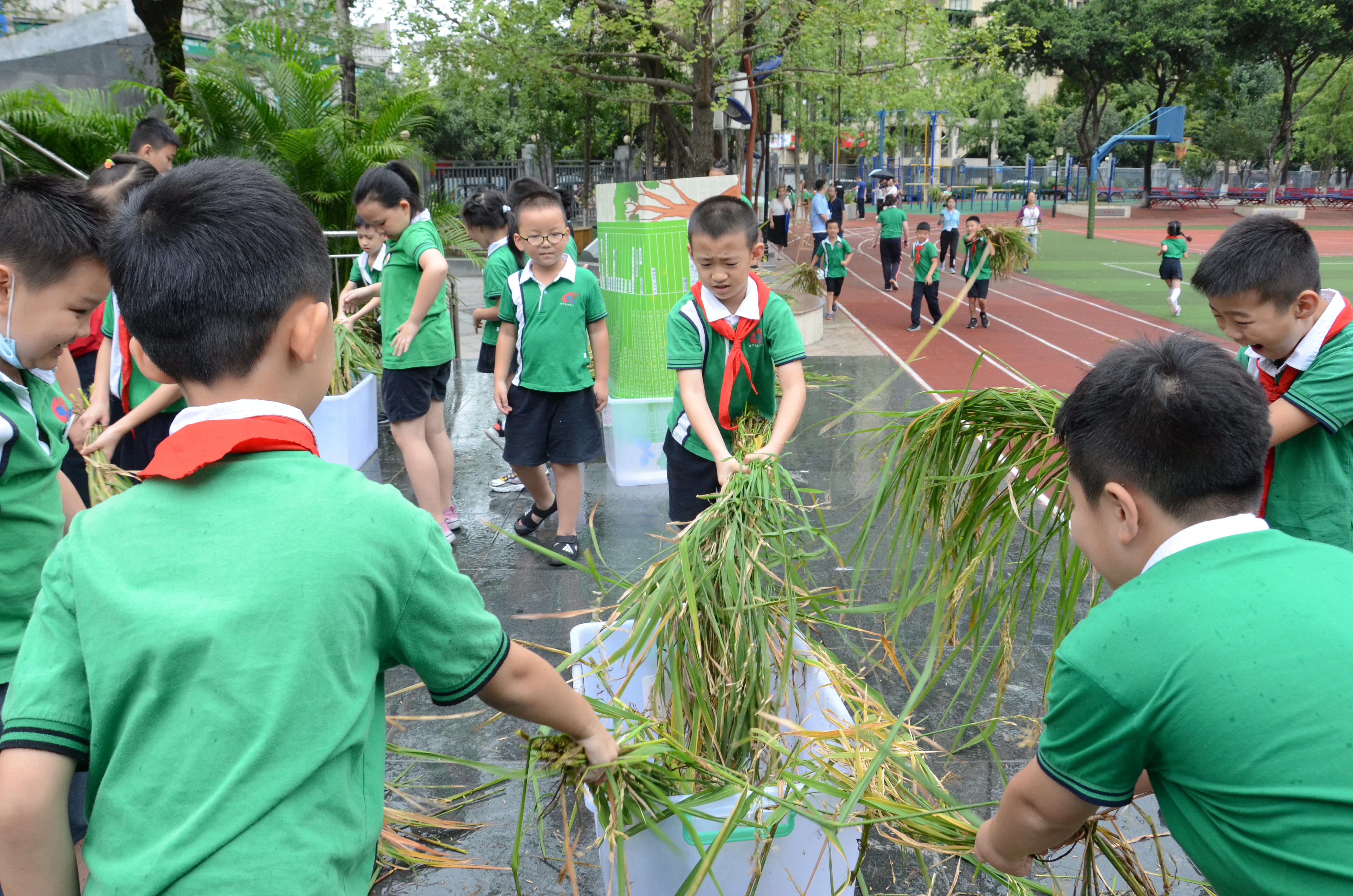 学生收获水稻。本文图片受访对象供图