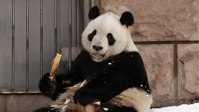 """北京动物园28岁大熊猫""""大地""""因病去世,已处于老年期"""