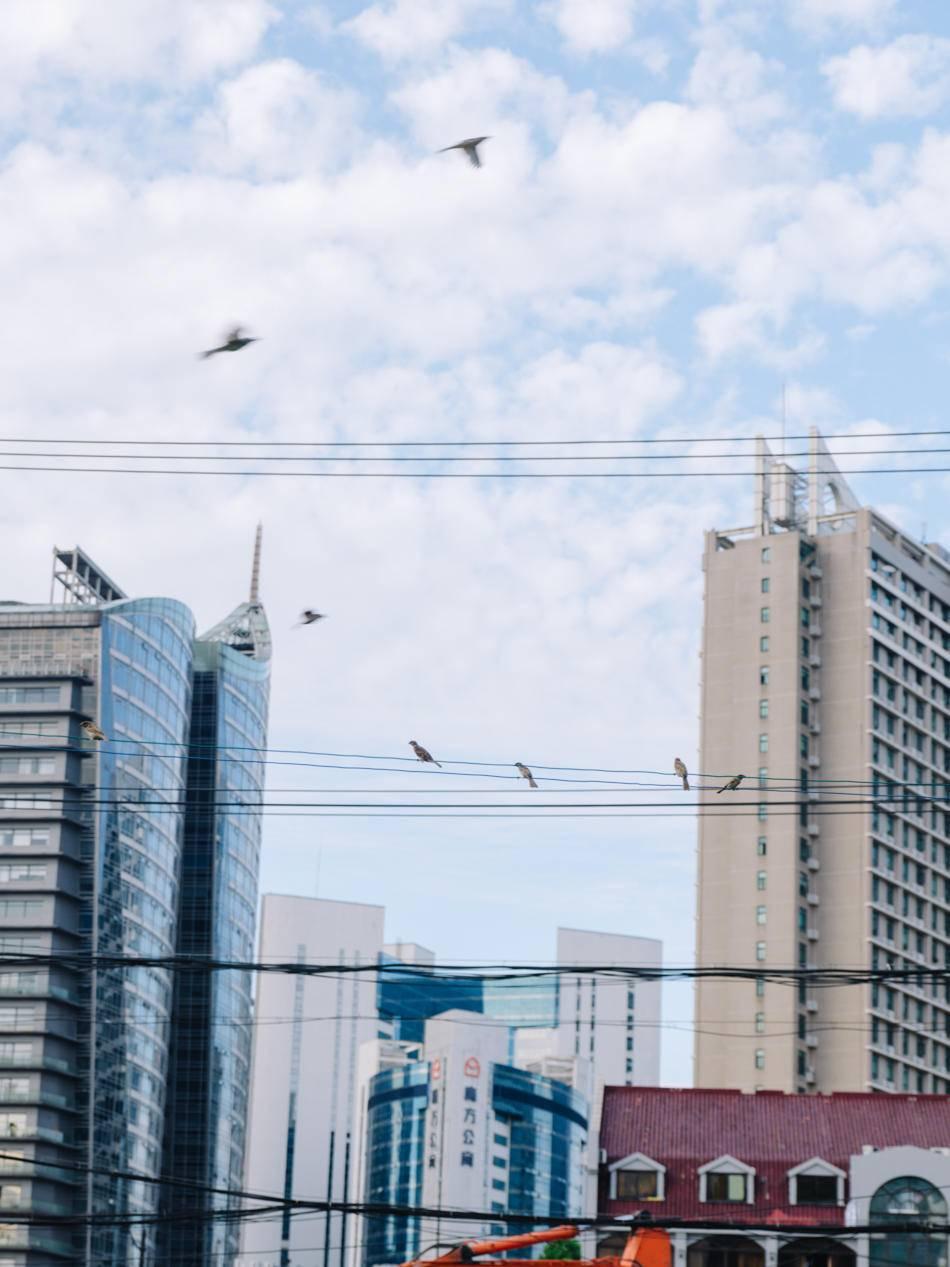 2020年8月11日,从昌平路桥上飞过的鸟。澎湃新闻记者 周平浪 图