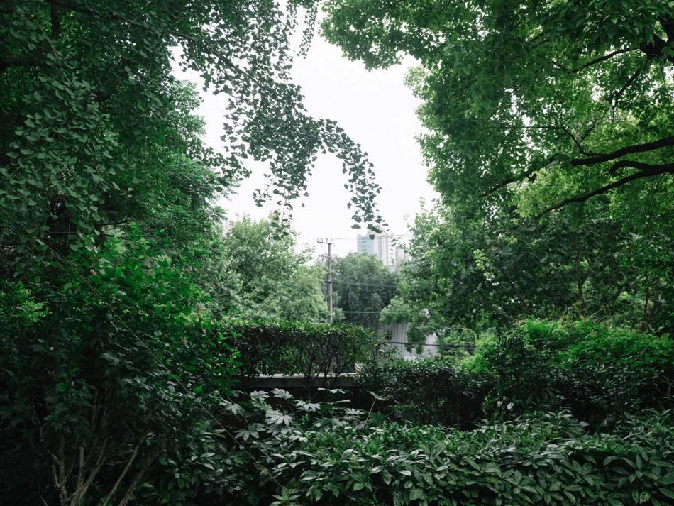 2020年8月11日,苏州河南岸的蝴蝶湾花园。澎湃新闻记者 周平浪 图