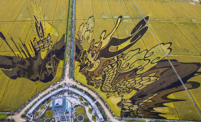 稻田画参观区引进彩色水稻,结合锡伯文化特色,利用色彩及三维等方式打造独特而神奇的稻田画。