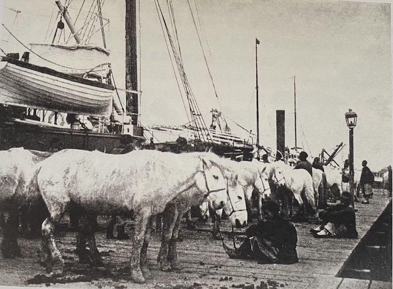 从塘沽登船前往旅顺增援的清军骑兵