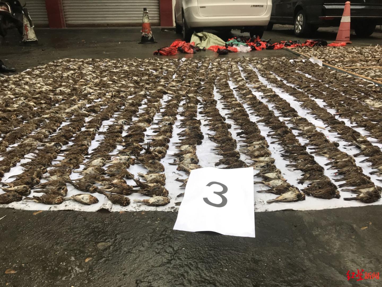 嫌疑人捕鸟8万多只被警方抓获
