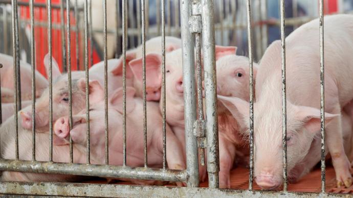 大北农拟参与发起100亿元产业基金:首期10亿元用于养猪