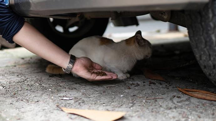 深观察|尊重动物的生存和境遇,就是尊重人自身