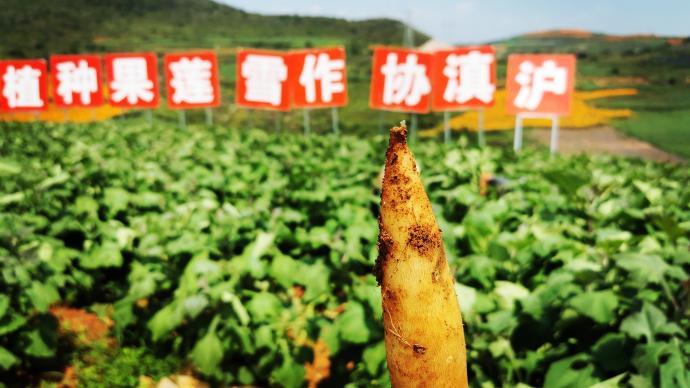 产业扶贫、消费扶贫,上海虹口对口帮扶五县全部实现脱贫摘帽
