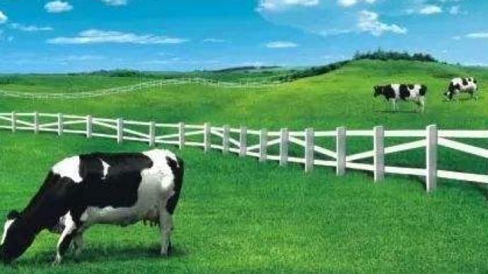 """可口可樂和蒙牛合資成立了家公司叫""""可牛了"""",生產低溫奶"""