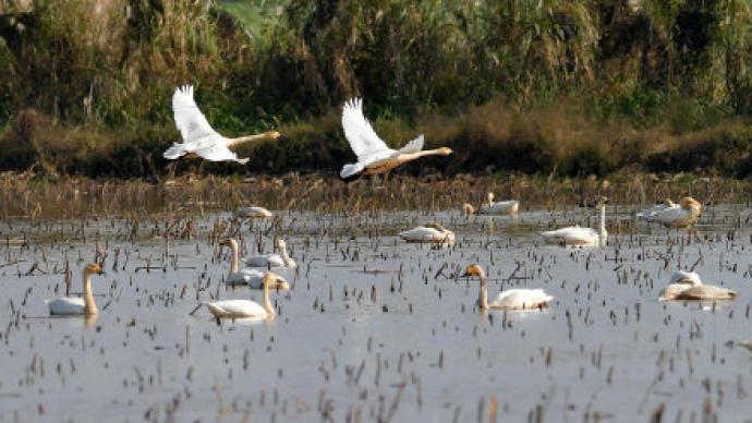 韓正:加強濕地和候鳥保護,嚴打破壞野生動物資源違法活動
