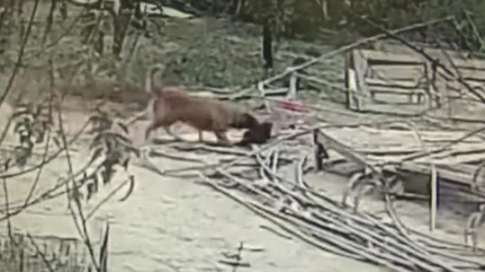 教唆金毛狗偷300多只雞,揚州一農家樂老板被采取刑事措施